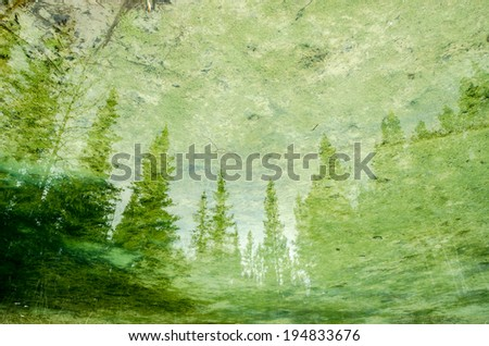 Forest reflection in motionless pond