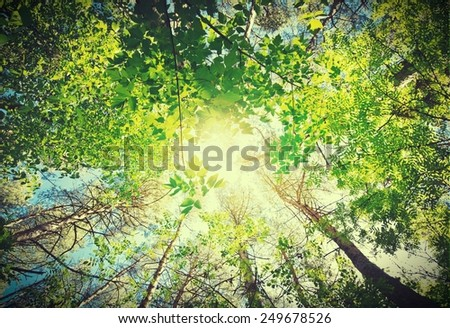 Forest. Retro style - stock photo
