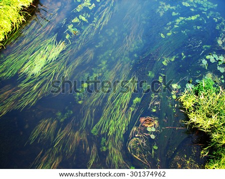 forest river algae in cold clear waters. Ukraine - stock photo