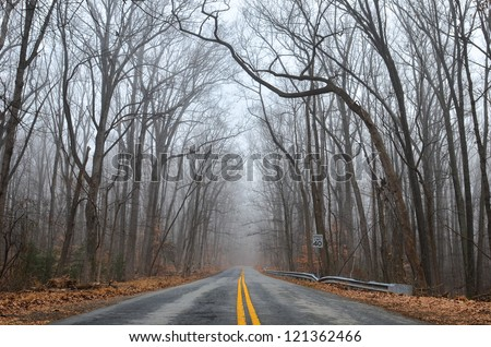 forest road in fog - winter season with dramatic leafless tree branches