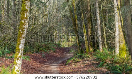 Forest road in the fall - stock photo