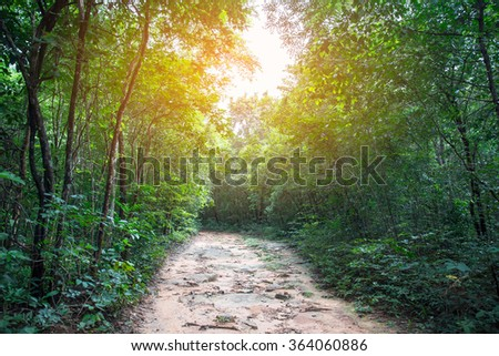 Forest road. Landscape - stock photo