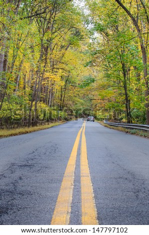 Forest road leading among autumn trees  - stock photo