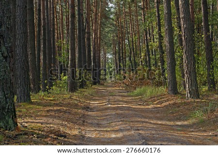 forest road, Path through Enchanted Autumn Forest, Path in the Forest/Woods, autumn road in the forest - stock photo