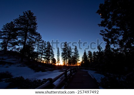 Forest road under sunset sunbeams. - stock photo