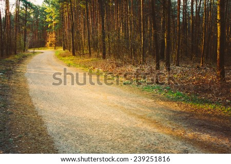 Forest Road Under Sunset Sunbeams. Lane Running Through The Spring Deciduous Forest At Dawn Or Sunrise - stock photo