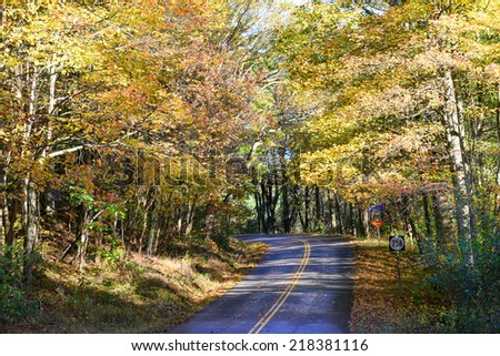 Forest road with autumn colors - stock photo