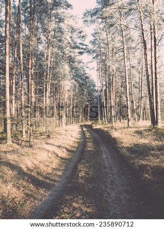 forest road with sun rays in the morning in the countryside. vintage warm color retro look - stock photo