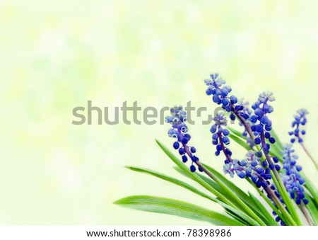 Forest's flowers on light green - stock photo