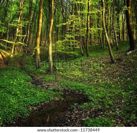 Forest scene during spring evening - stock photo