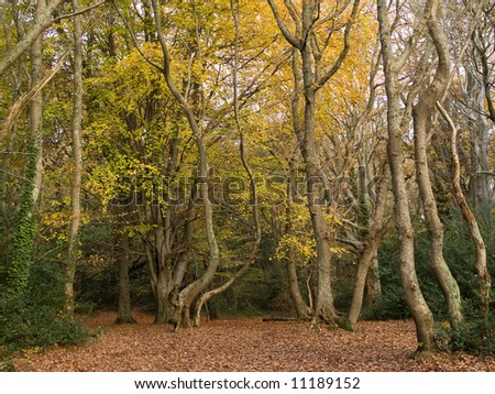Forest scene in autumn
