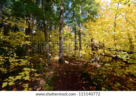 Forest scenery in autumn at Algonquin Park, Ontario, Canada - stock photo