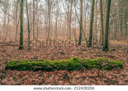 Forest scenery with trees in the autumn - stock photo