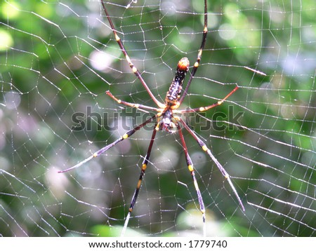 Forest Spider - stock photo