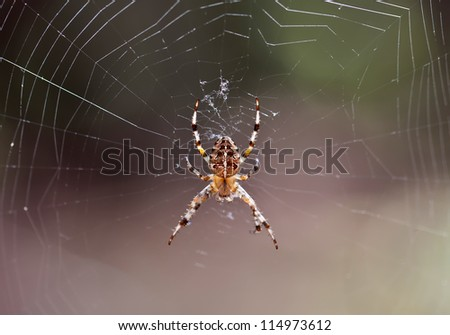 Forest spider on web close view - stock photo