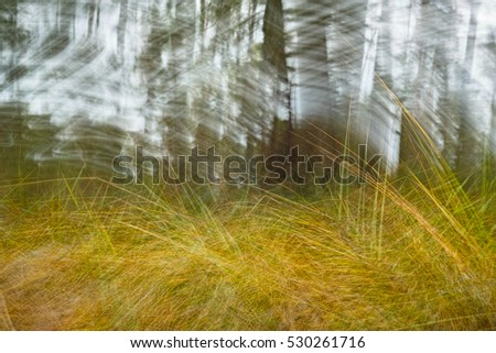 Forest spring in motion defocused abstract background