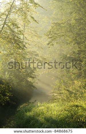 Forest stream in the morning sun before the arrival of autumn. - stock photo