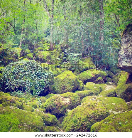 Forest Stream Near the Town of Florac in France, Instagram Effect - stock photo