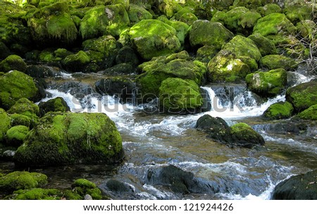 Forest stream over green mossy rocks.