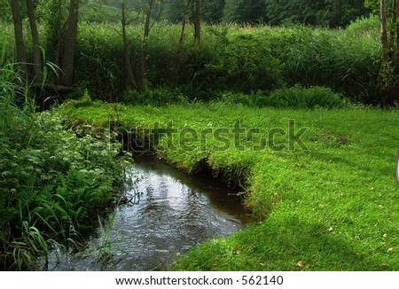 Forest Stream - summer landscape - stock photo