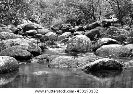 Forest stream, Wild Thailand in black and white style - stock photo