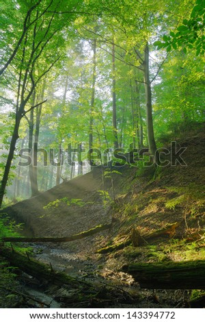Forest stream with sunrays