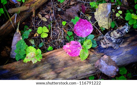 forest substrate close-up - stock photo