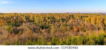 Forest tops autumn landscape