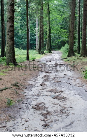 forest track after heavy rain (Germany) - stock photo
