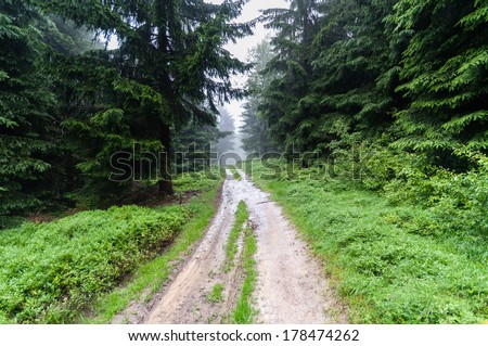Forest trail among trees on a foggy autumn morning - stock photo