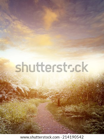 Forest trail and bright sky - stock photo