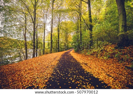Forest trail covered with golden autumn leaves in the fall with tall trees in autumn colors by the road