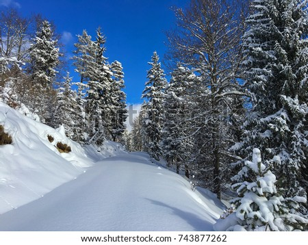 Forest trail, hiking path covered with smooth thick snow in sunny winter day with mountain, snowy pine trees and blue sky background. Austria, Europe