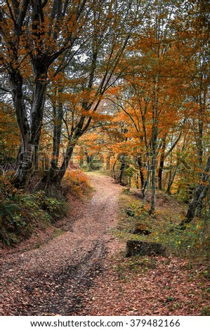 Forest trail in autumn forest