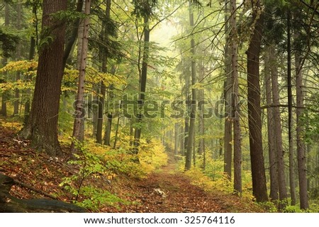 Forest trail in autumn scenery in early October. - stock photo
