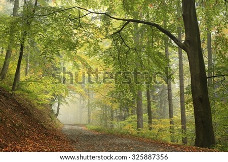 Forest trail in foggy autumn morning. - stock photo