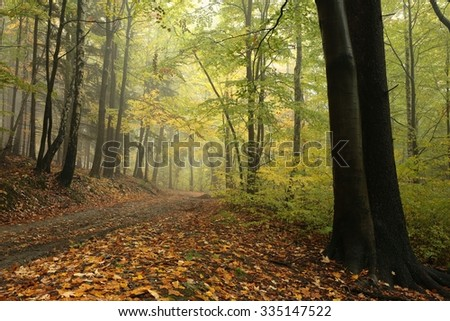 Forest trail in foggy autumn weather. - stock photo