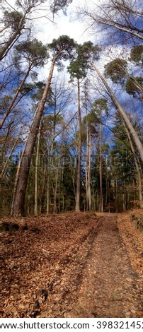 Forest trail in south Germany in March - stock photo