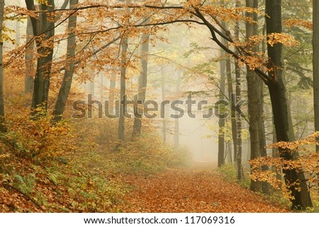 Forest trail in the mountains on a misty autumn day. - stock photo
