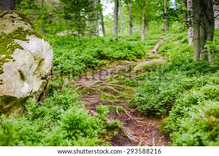 Forest trail. nature green wood background - stock photo