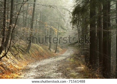 Forest trail on a foggy late autumn morning. - stock photo
