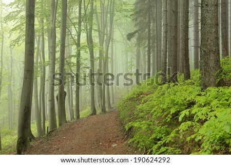 Forest trail on a foggy rainy morning. - stock photo