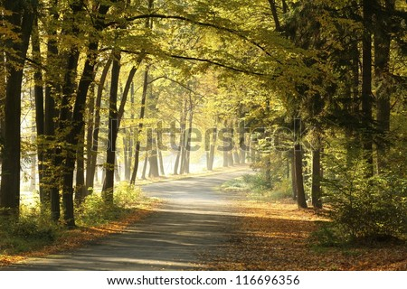 Forest trail on a sunny October's morning. - stock photo