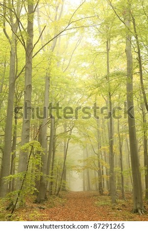 Forest trail surrounded by beech trees in a misty autumn morning. - stock photo