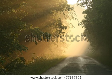 Forest trail surrounded by mist resulting from heavy rain during the sunset. - stock photo