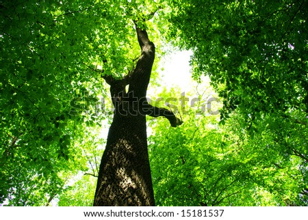 forest tree. nature green wood backgrounds. Beauty natural background