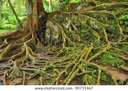 Forest tree with roots