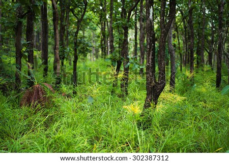 forest trees - stock photo
