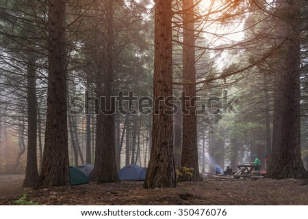 Forest trees. Camping tents in the dark among tall trees forest.