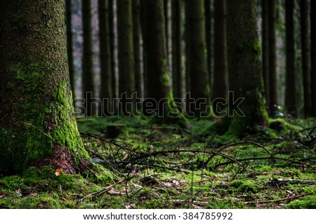 Forest trees during autumn in the Ardennen Belgium